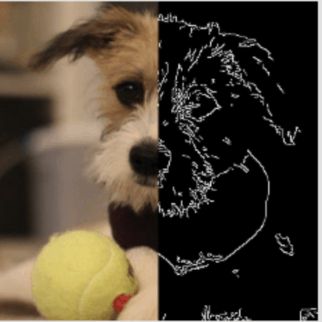 image chien 2