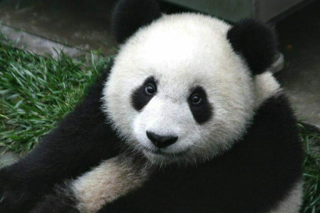 Analyse exploratoire de données avec Pandas